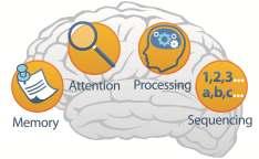 MAPS_brain01.jpg